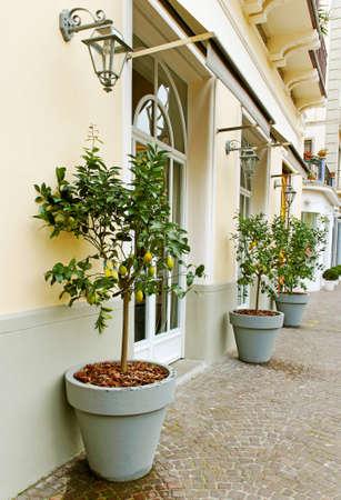 jardineras: Plantadores de �rboles de lim�n en la calle sobre Sorrento