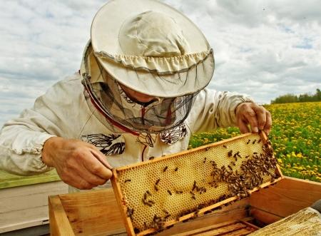 colmena: Trabajo apicultor en una temporada de primavera Foto de archivo