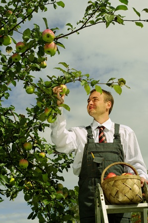 Man working in the apple garden   photo