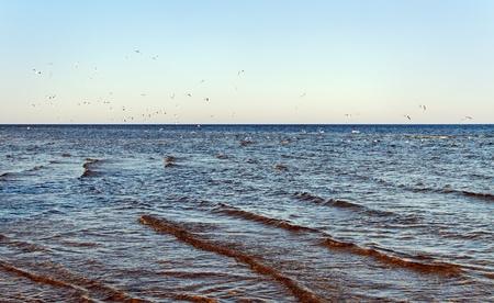 Seagulls at the Baltic sea  photo