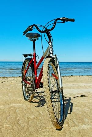 beach cruiser: Natural bike on the beach