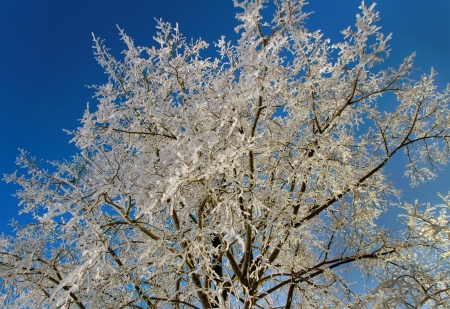 Tree with frost on the branches in a winter season  photo