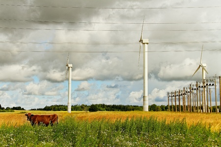 Wind generators on the land and brown cow  photo