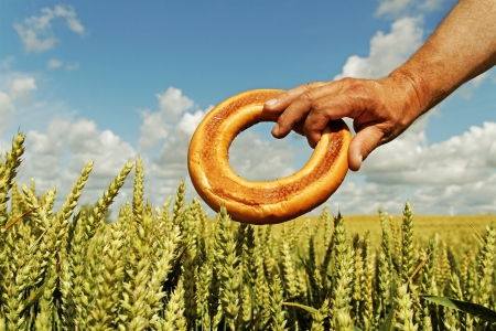 Sweet bread in man hand and growing wheat on the land  photo