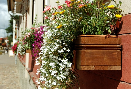 Flower box on the town street   Stock Photo - 14629923