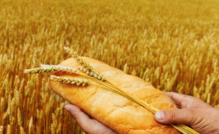 Bread with spikes in man hand  photo