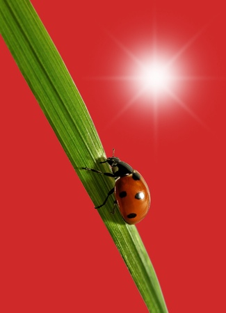 Ladybird on the  green grass. photo