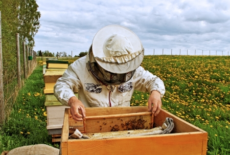 Apiarist is workind in his apiary. photo