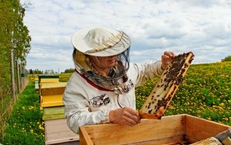 Apiarist is workind in zijn bijenstal.