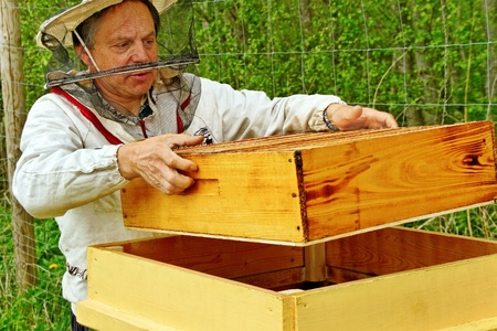 apiary: Working apiarist in his apiary.