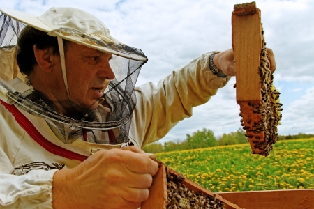 apiary: Apiarist is workind in his apiary.