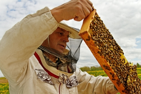 Apiarist is workind in zijn bijenstal. Stockfoto - 15002481