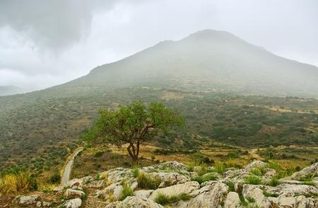 delfi: Delfi landscape with lonely tree