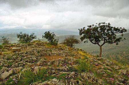 Delfi landscape with mountain trees Stock Photo - 16112239