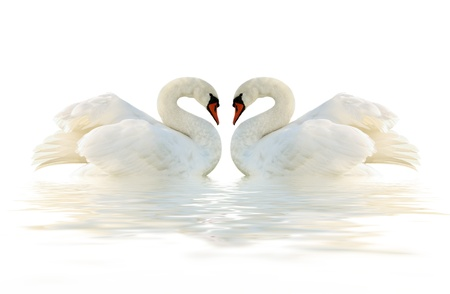 Two swans on the white surface