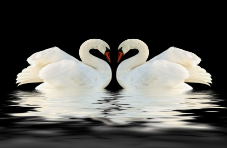 Two swans on the black surface