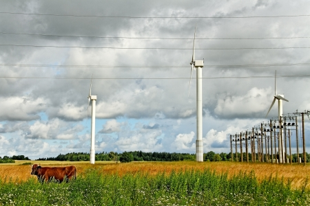 Brown cow on the field at wind generators   photo