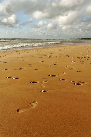 Track on the gold sand at the sea  photo