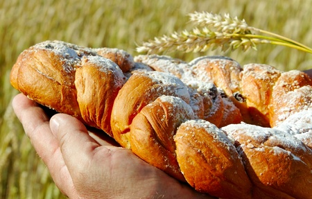 Farmer on the field with sweet bread and spike of wheat  photo