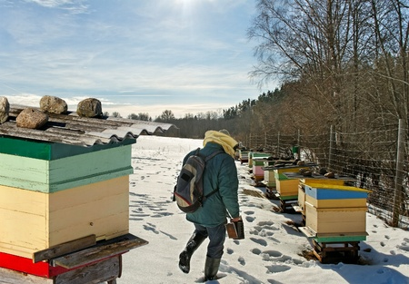 Beehives outdoor in winter season, bees feeding  Stock Photo - 18205812
