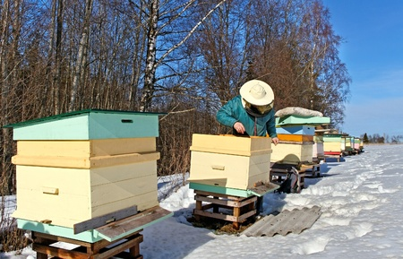 Beehives outdoor in winter season, bees feeding  Stock Photo - 18205824