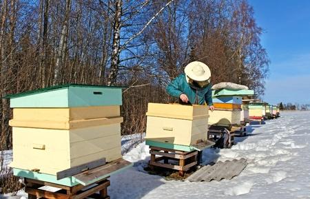 Beehives outdoor in winter season, bees feeding Stock Photo - 18205824