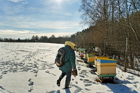 Beehives outdoor in winter season, bees feeding  Stock Photo - 18205816