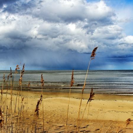 Baltic sea coastline with grasses. Stock Photo