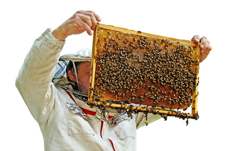 apiarist: Beekeeper is holding a frame of honeycomb.