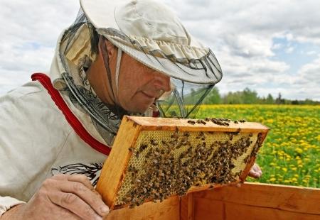 Working apiarist in a spring season.