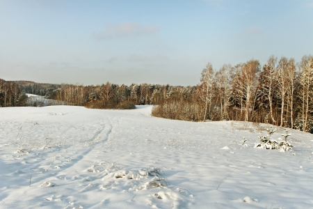 bosk: Snowy field in the morning. Stock Photo