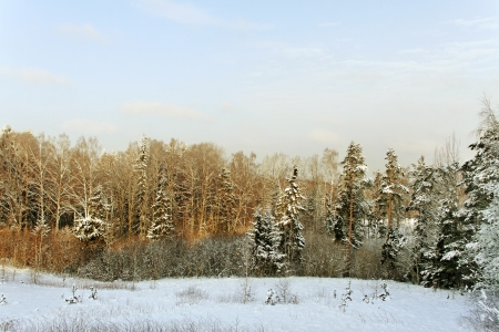 Winter landscape in a morning. photo