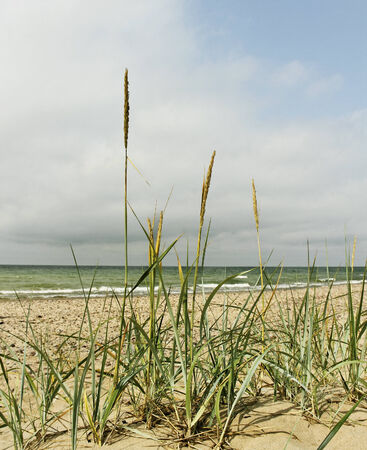 At the Baltic sea coastline. Stok Fotoğraf