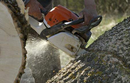 Man cuts a fallen tree, dangerous work.