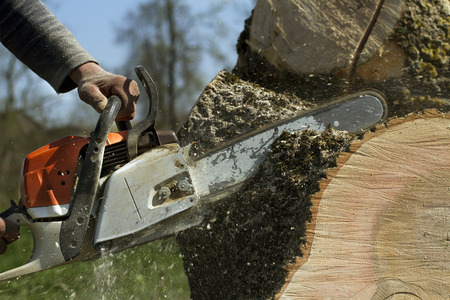 Man cuts a fallen tree, dangerous work.