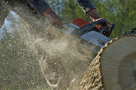 Man snijdt een omgevallen boom, gevaarlijk werk. Stockfoto