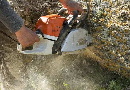 tree service: Man cuts a fallen tree, dangerous work.