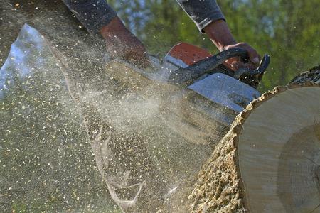 Man cuts a fallen tree, dangerous work.  photo