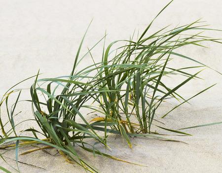 Green grass on the beach.