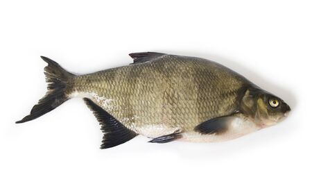 tench: Tench on the white surface. Stock Photo
