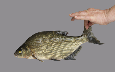 fish tail: Man holding a fish tail.