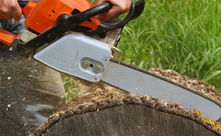 hand tree: Man cuts a fallen tree. Stock Photo