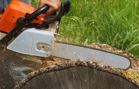 tree removal service: Man cuts a fallen tree. Stock Photo