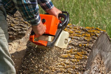 Man coupe un arbre tombé, un travail dangereux. Banque d'images - 43206962