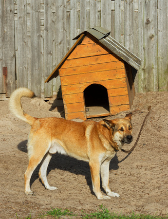 doghouse: Big dog at the his curve doghouse. Stock Photo