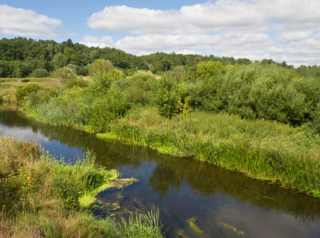 small river: Small river in a summer. Stock Photo