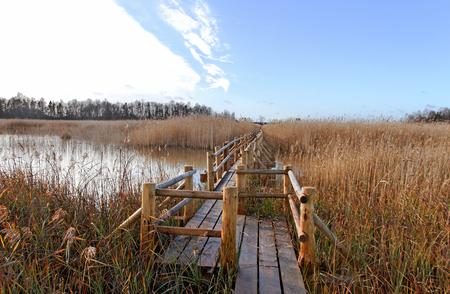 birdwatching: Birdwatching path in a lake.
