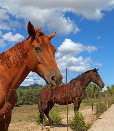 cinta: Horse in the Sun Teodoro next to the beach of La Cinta.