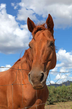 cinta: Horse in the Sun Teodoro next to the beach of La Cinta, Italy. Stock Photo