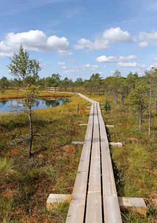 bog: Wooden path in the bog.